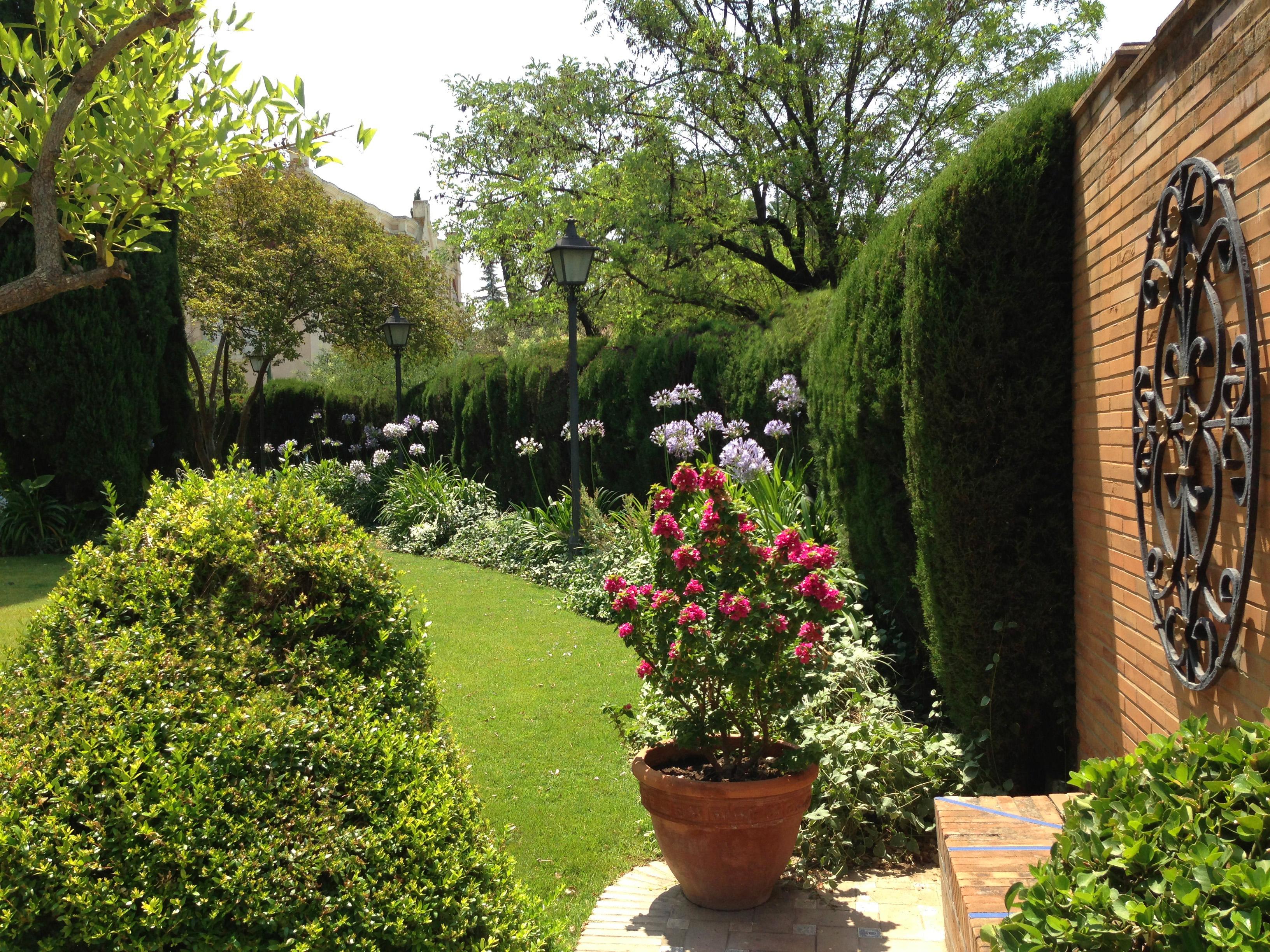 Jardin plantas